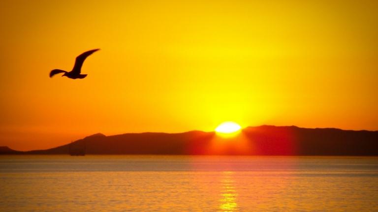 ảnh Con Chim Vào Buổi Sáng