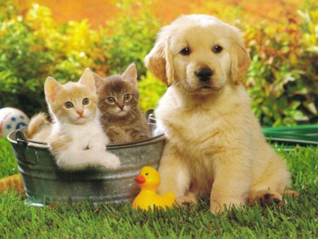 ảnh chó mèo cute