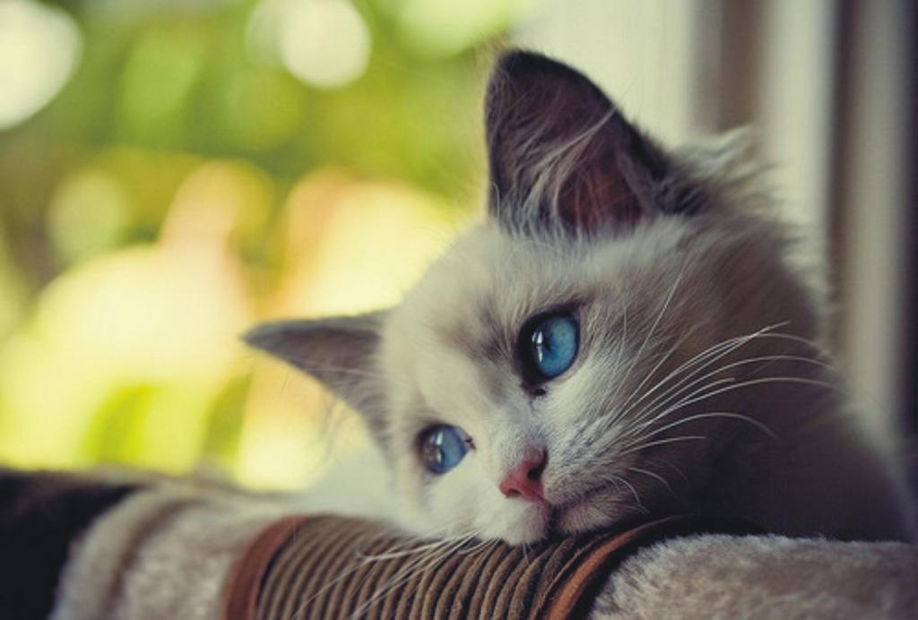 ảnh Mèo Con đáng Yêu Tâm Trạng Nhất