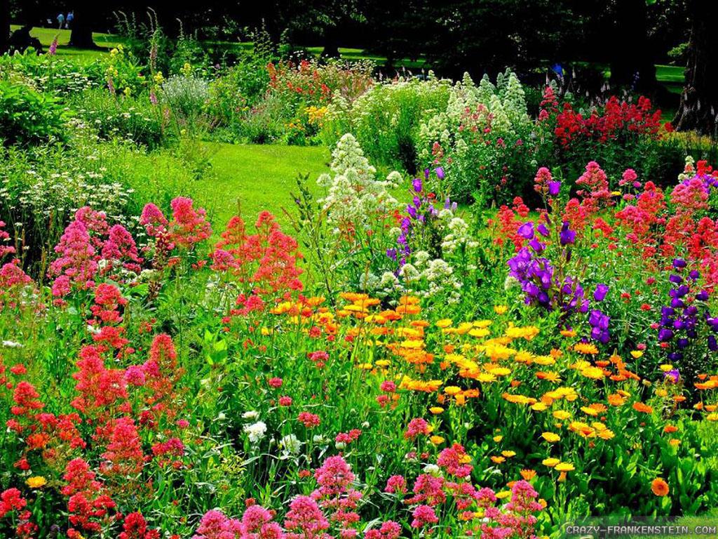 ảnh Vườn Hoa Tự Nhiên