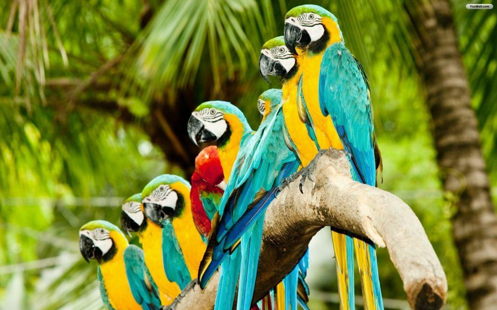 1 đàn Chim Vẹt đẹp