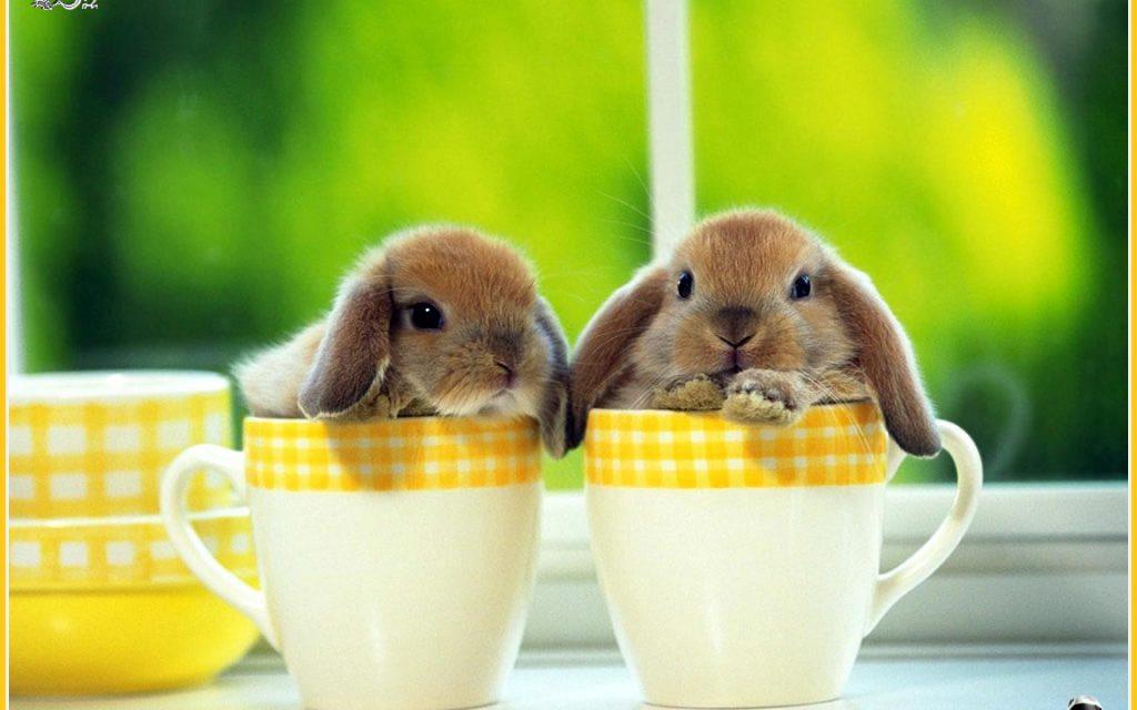2 Con Thỏ Dễ Thương