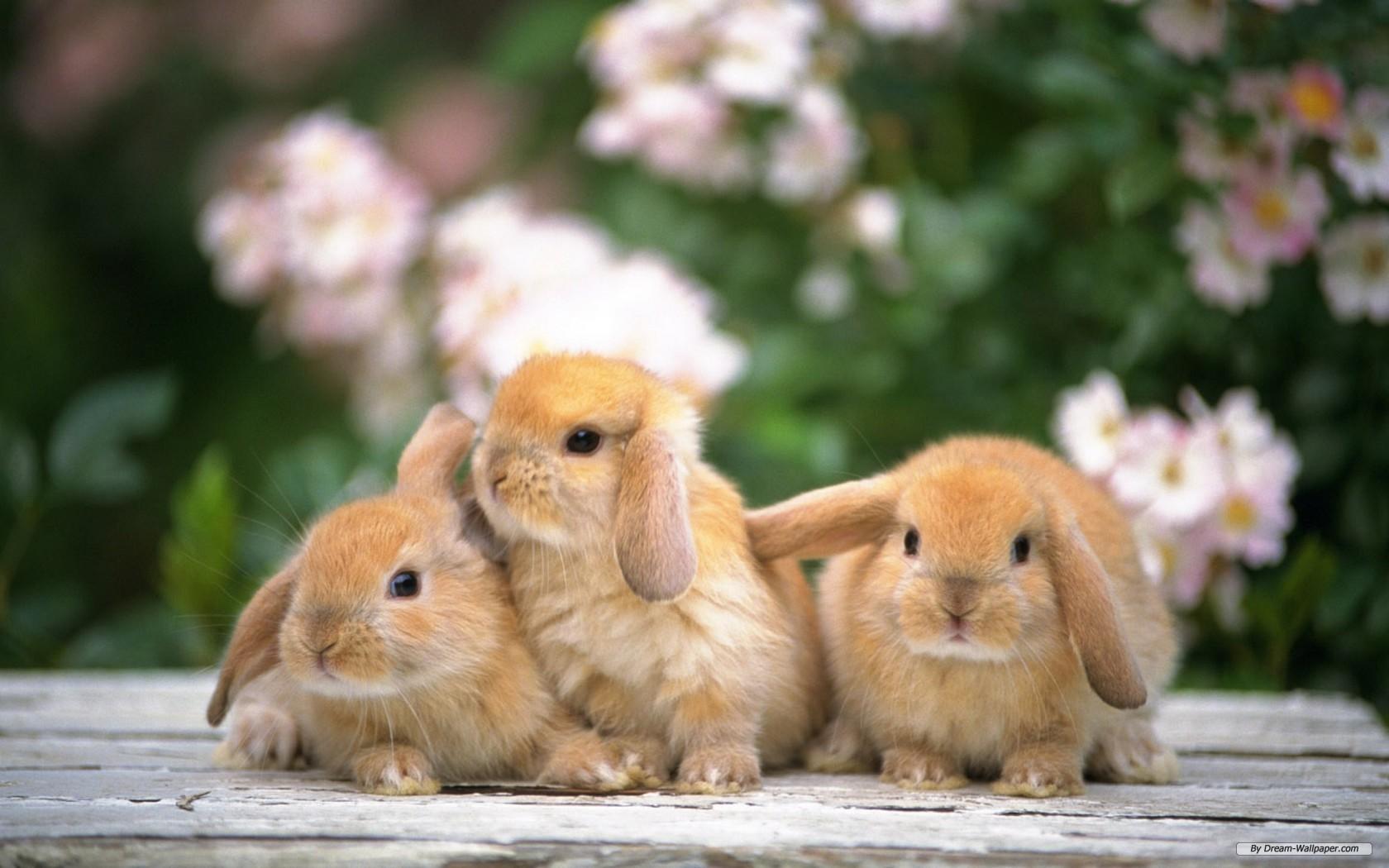 3 Con Thỏ Dễ Thương