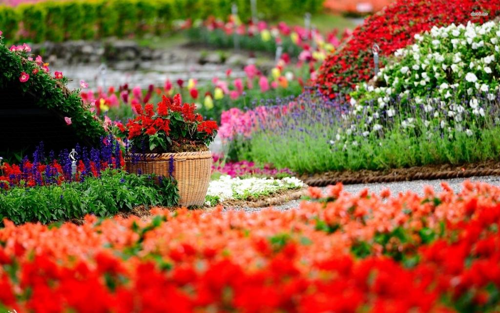 Chậu Hoa đẹp Tại Vườn