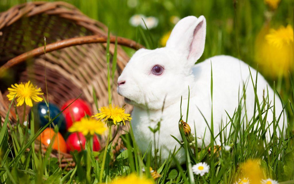 Con Thỏ Trắng Dễ Thương