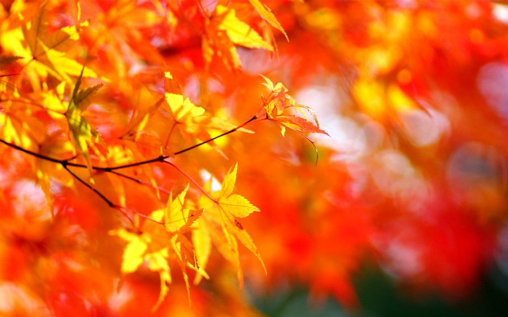 Foliage-wallpapers