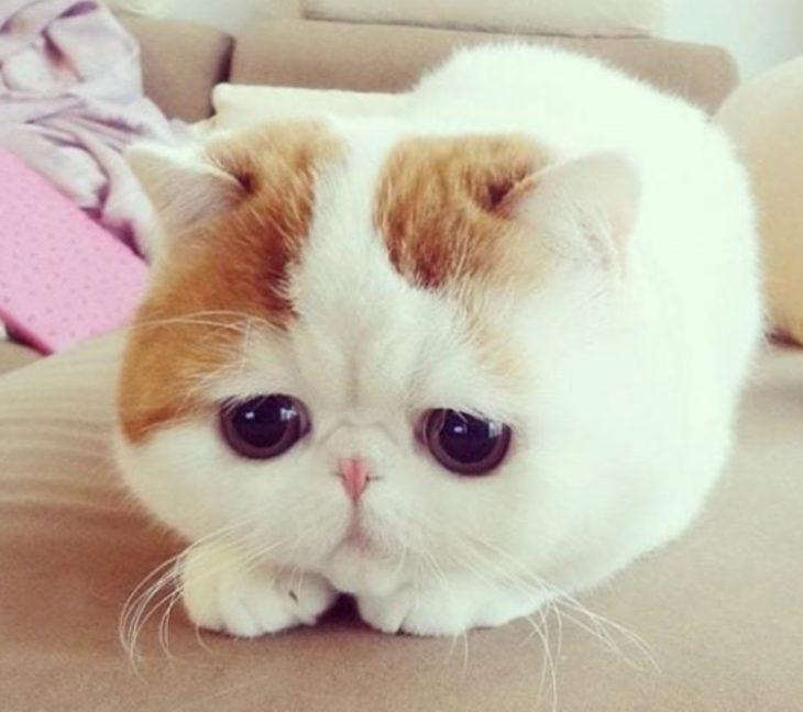 Mèo Con Có đôi Mắt Buồn
