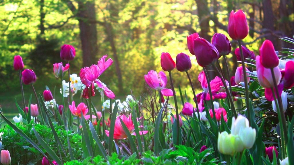 Hình Vườn Hoa Hông Tuyệt đẹp