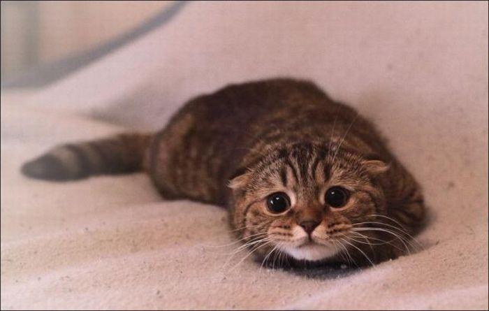 Mèo Con Có Khuôn Mặt Buồn