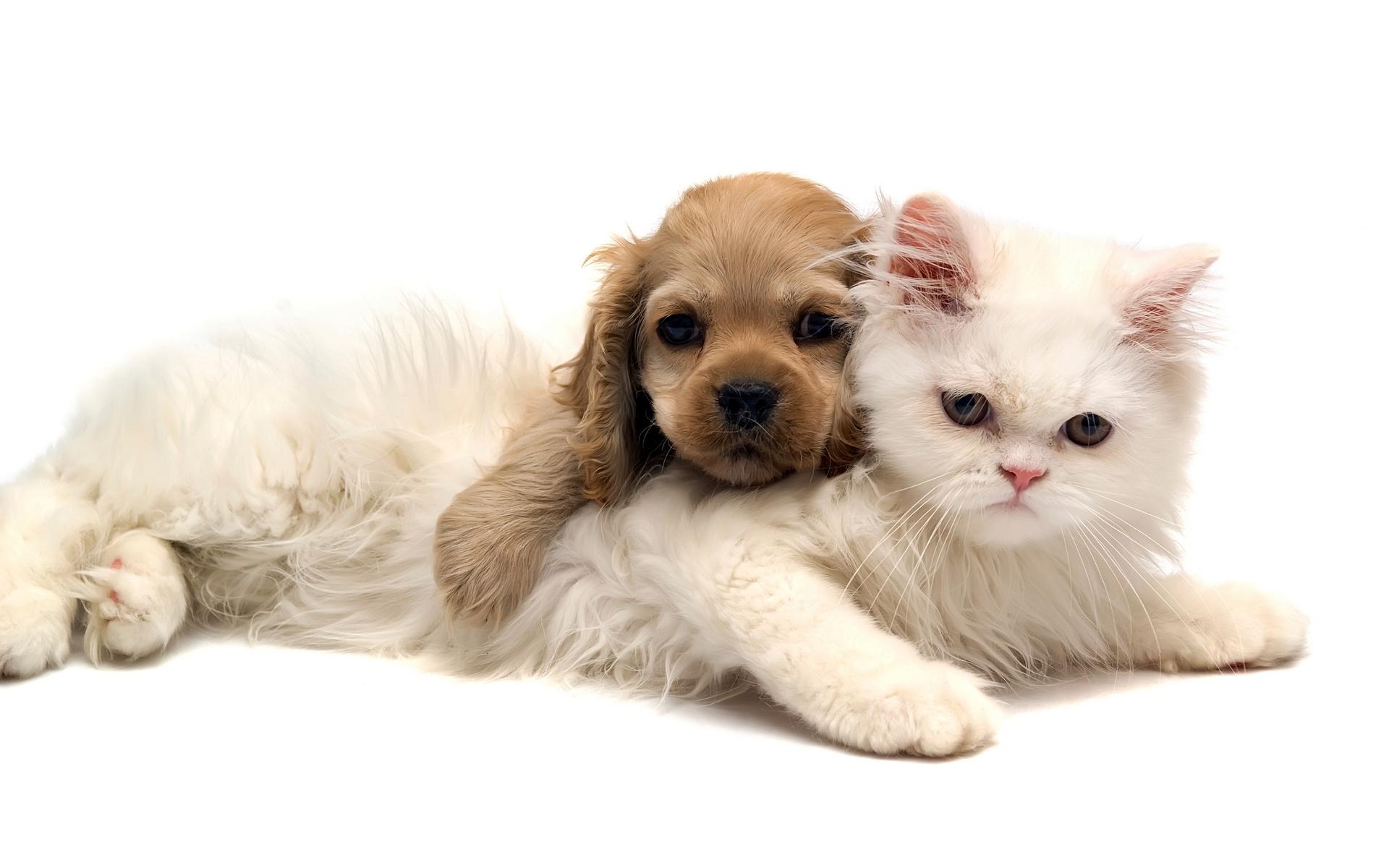 Hình ảnh những chú chó con dễ thương làm hình nền đẹp