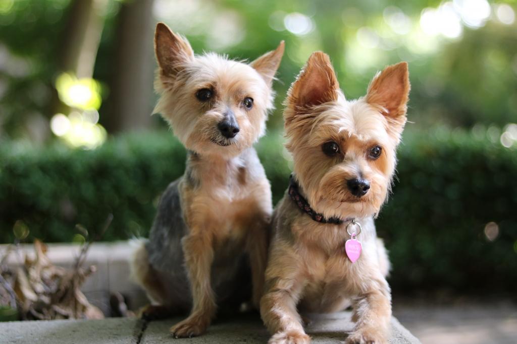 Tình Bạn Thân Của 2 Chú Chó