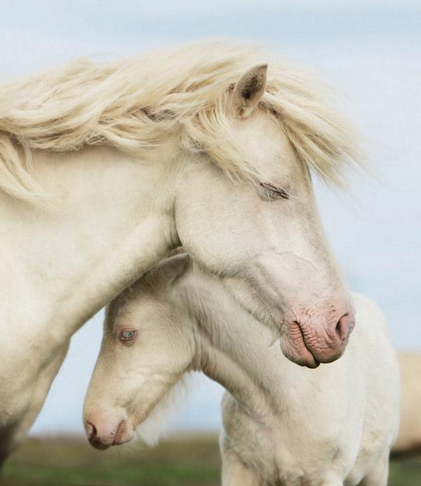 Nhhững Hình ảnh Con Ngựa Dễ Thương đáng Yêu