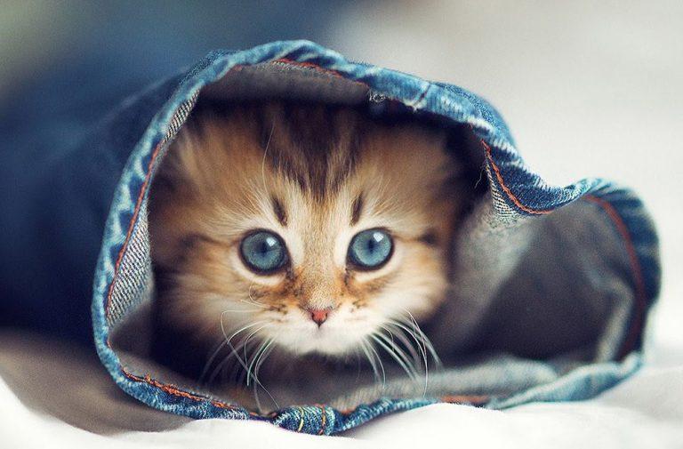 Tổng Hợp 100 Hình ảnh Mèo Con Nghộ Nghĩnh Cute Nhất Thế Giới (5)