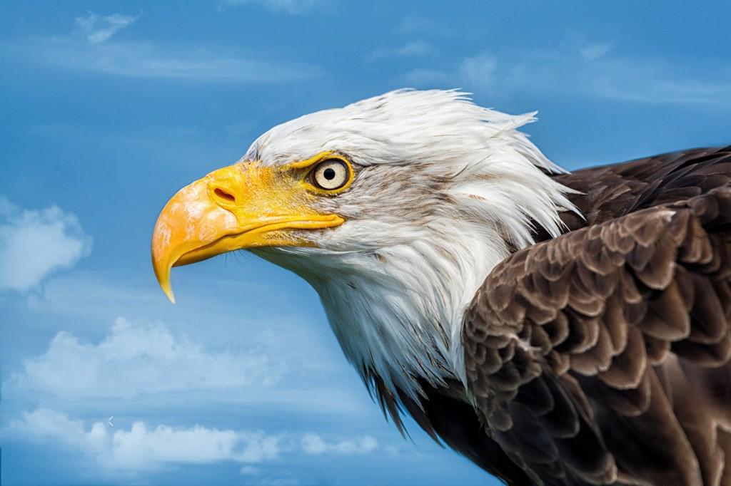 Tổng Hợp Những Hình ảnh Nền Chim đại Bằng Cho Máy Tính đẹp Nhất (12)