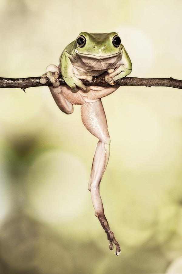 ảnh Chú ếch Leo Cây
