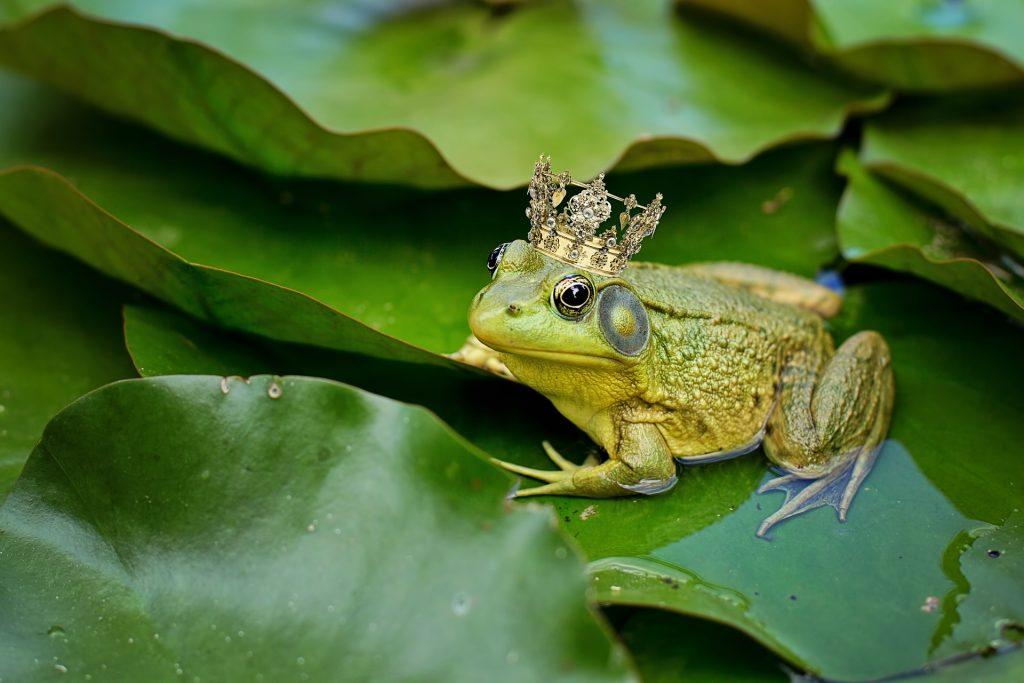 Tổng Hợp Hình ảnh Con ếch đẹp Nhất