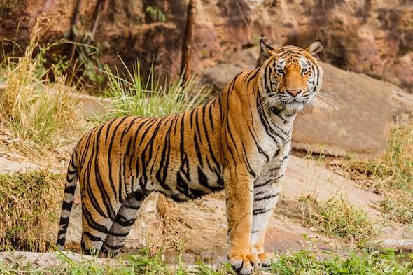 Con Hổ Tuyệt đẹp