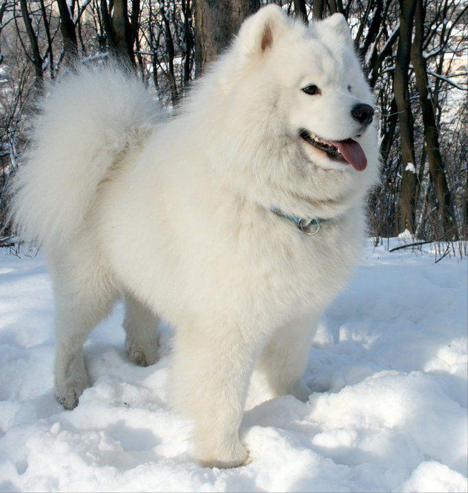 Hình ảnh Chó Cười