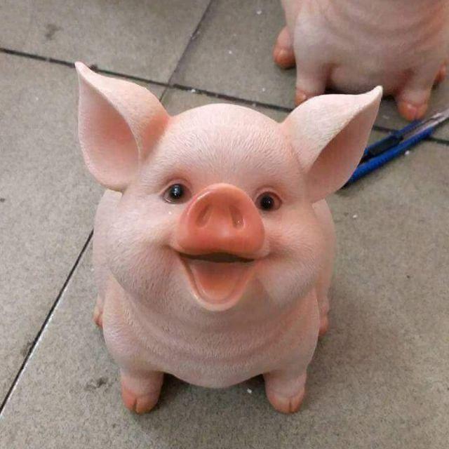 Hình ảnh con lợn đẹp