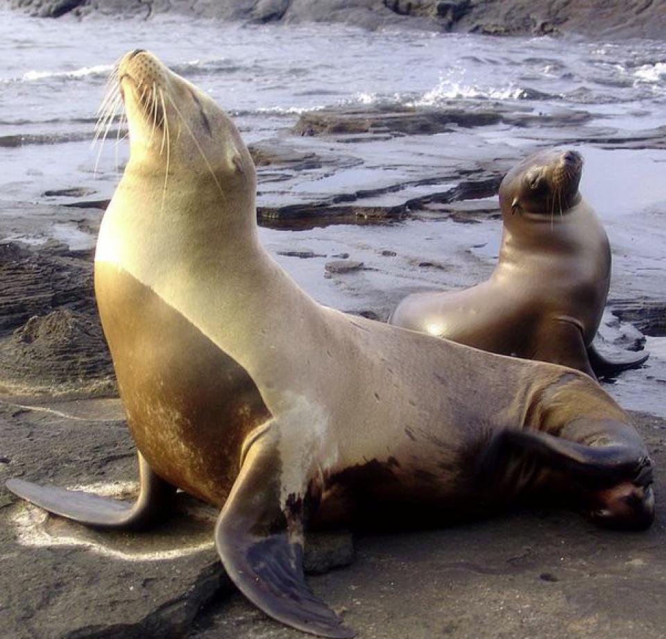 Hình ảnh Hải Cẩu