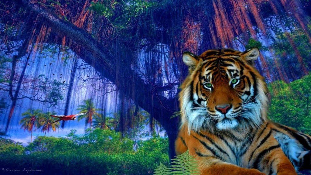 Hình ảnh Hổ đẹp