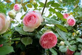 Hình ảnh Những Bông Hoa đẹp