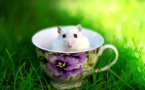 Hình ảnh Con Chuột Cute
