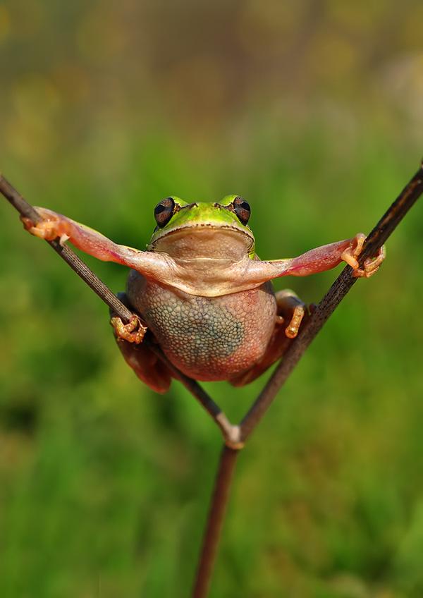 Hình Chú ếch đang Bám Cành Cây