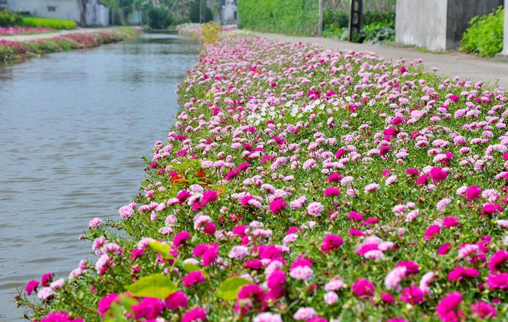 Hình ảnh Hoa Mười Giờ đẹp