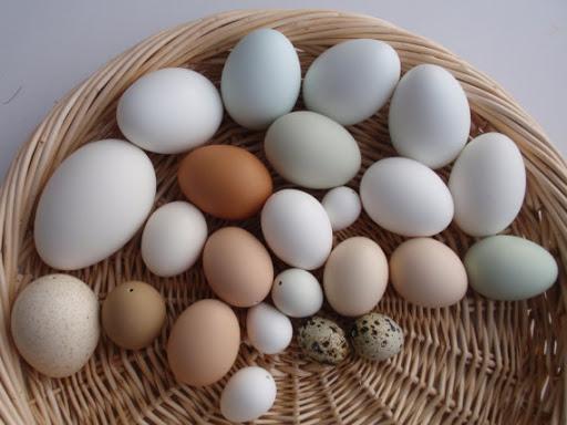 Trứng Cút Trứng Gà Trứng Vịt