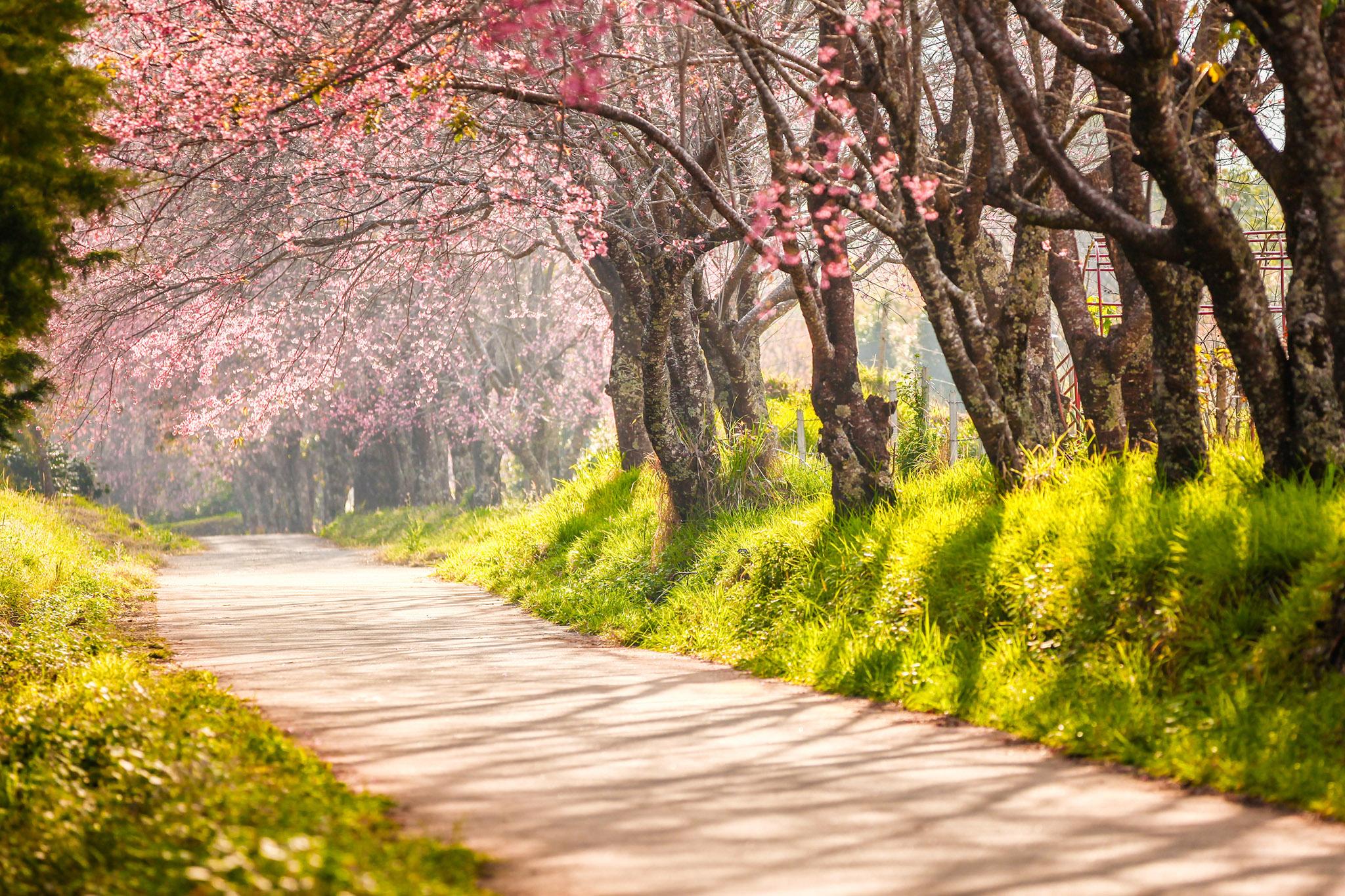 Hình ảnh Con đường Tình Yêu đẹp
