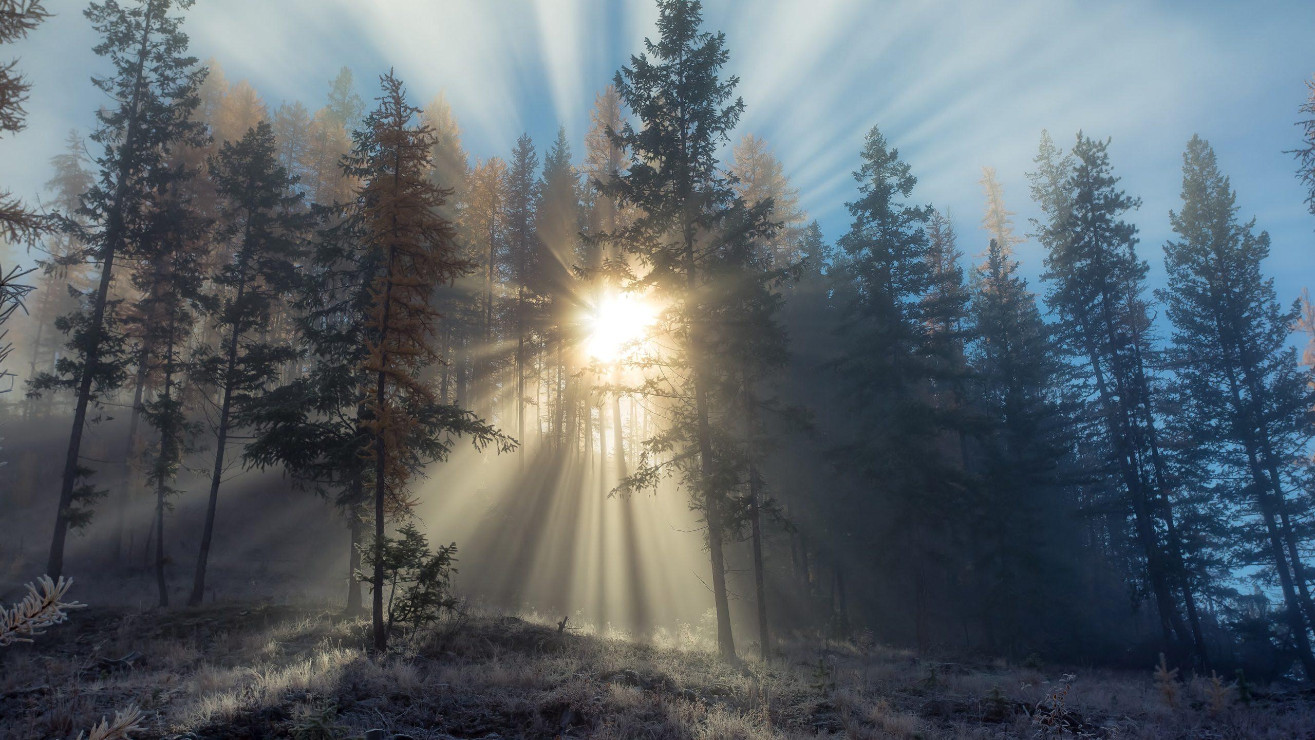 Hình Nền Mặt Trời Mọc Sau Rừng Cây Chất Lượng 4k Tuyệt đẹp