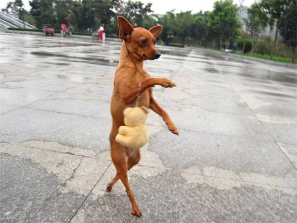 Hình ảnh Những Chú Chó Hài Hước 16