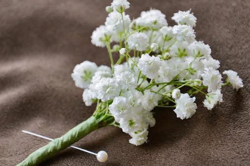 Ảnh hoa baby trắng