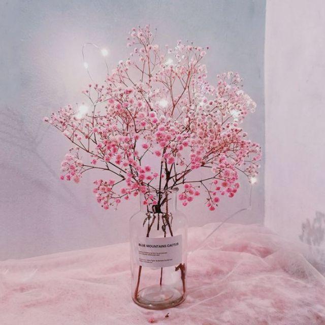 Hình ảnh Hoa Baby Hồng
