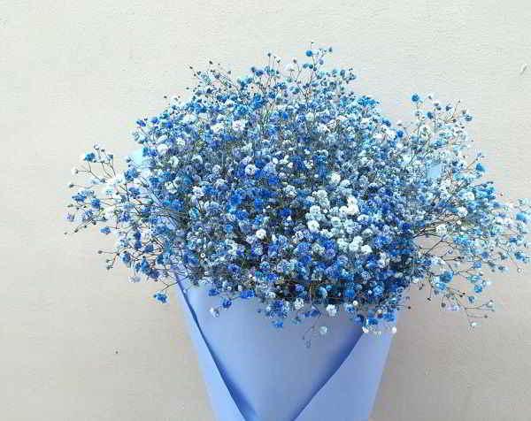 Hình ảnh Hoa Baby Xanh